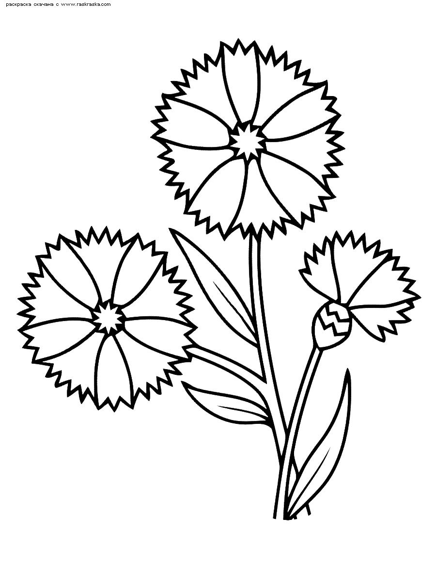 Раскраска Васильки | Раскраски цветов для маленьких детей