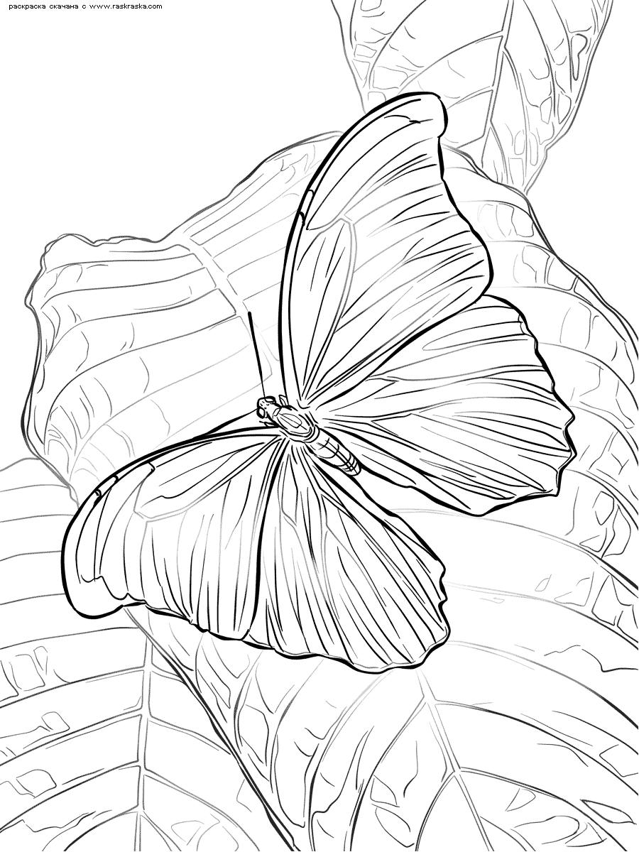 Раскраска Бабочка на листе. Раскраска бабочка