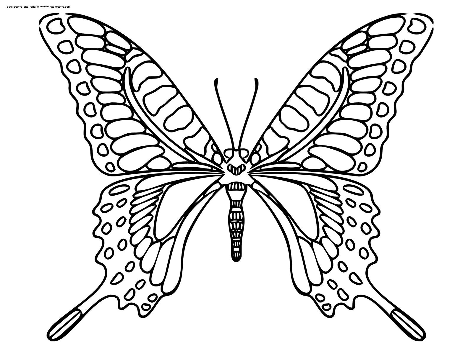 Раскраска Махаон. Раскраска бабочка