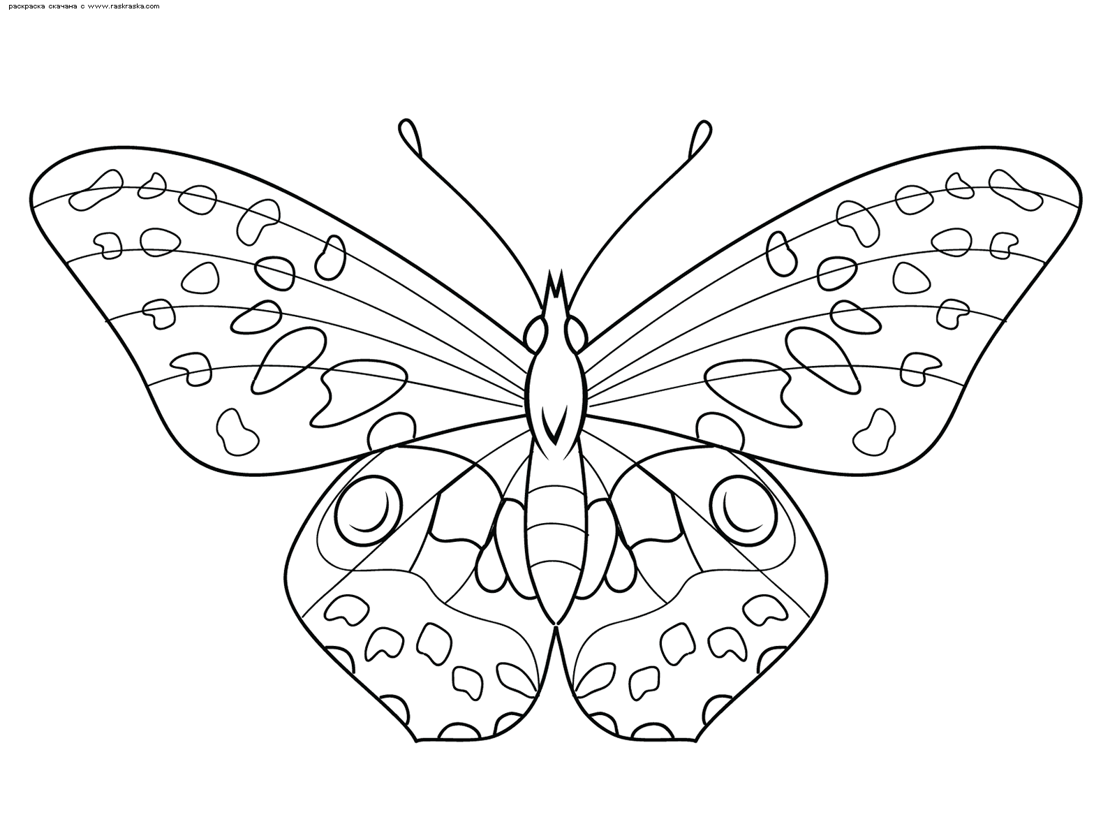 Раскраска Бабочка. Раскраска бабочка