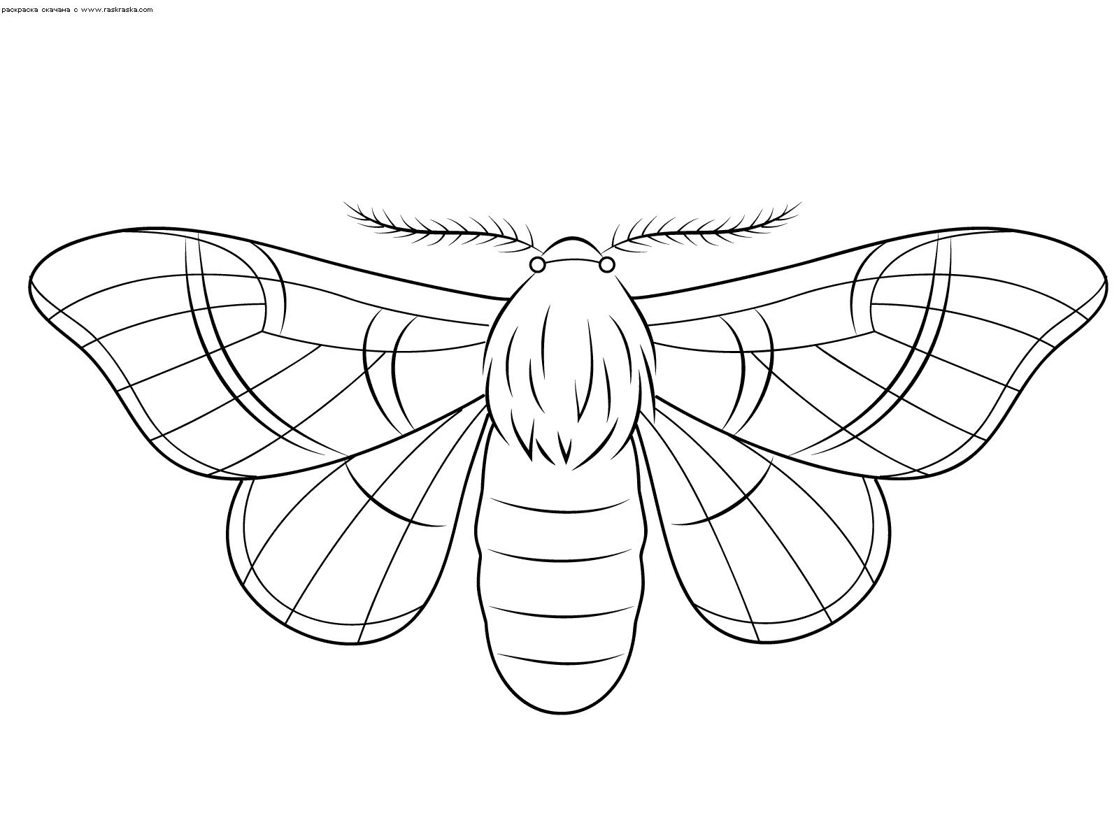 Раскраска Мотылек. Раскраска бабочка, мотылек