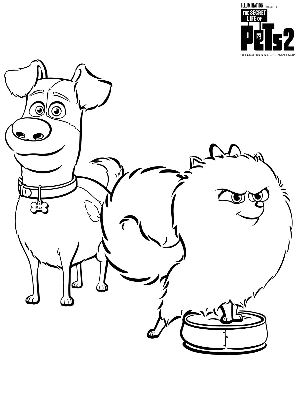 Раскраска Макс и Гиджет. Раскраска Собаки, домашние животные