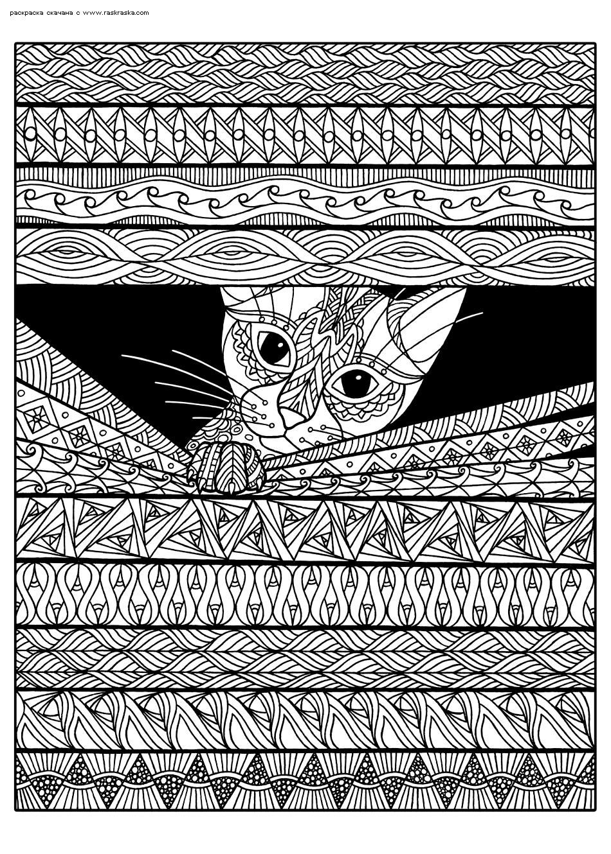 Раскраска Любопытный кот. Раскраска антистресс, кот