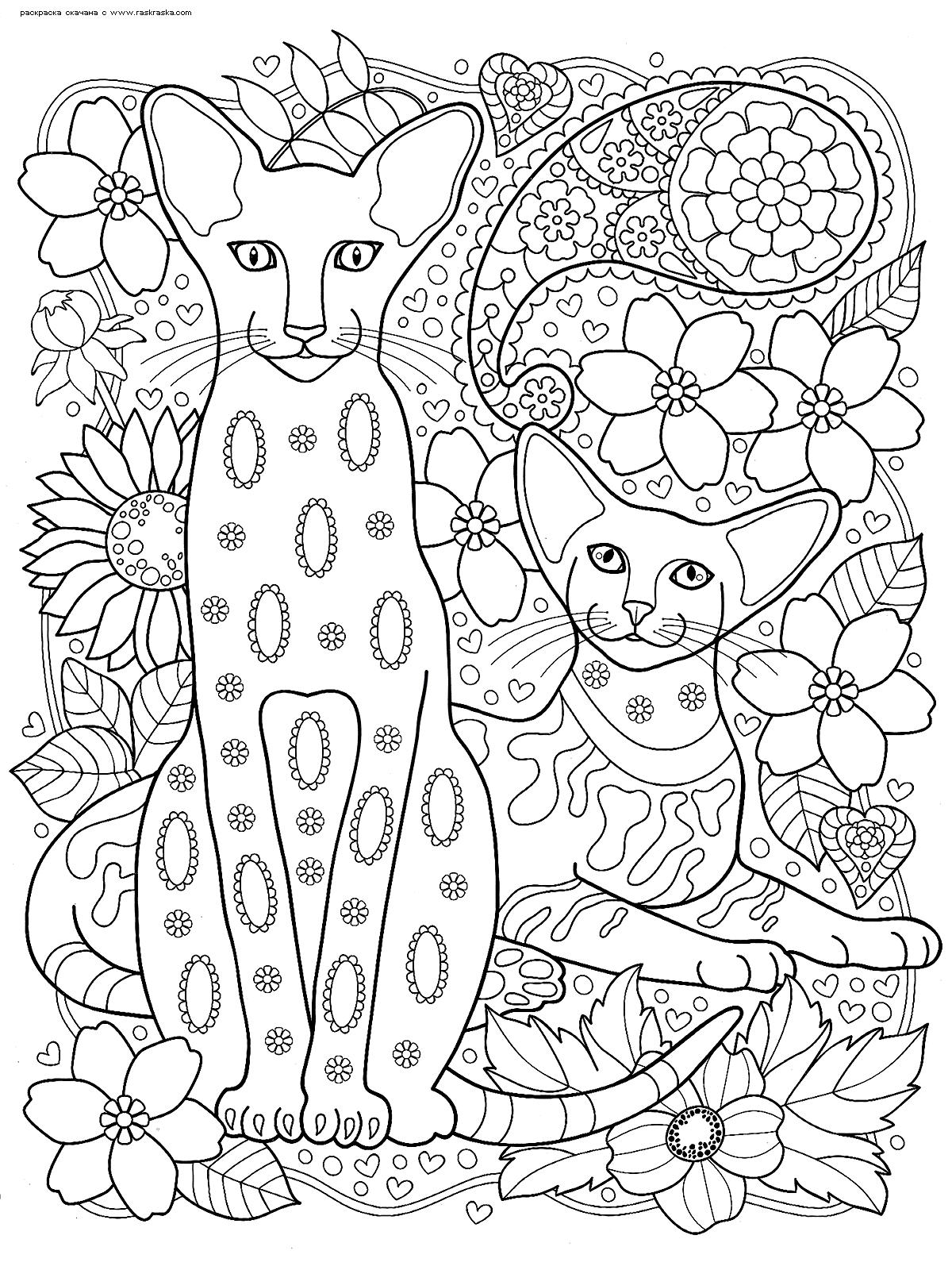 Раскраска Коты сфинксы | Раскраски антистресс Кошки ...