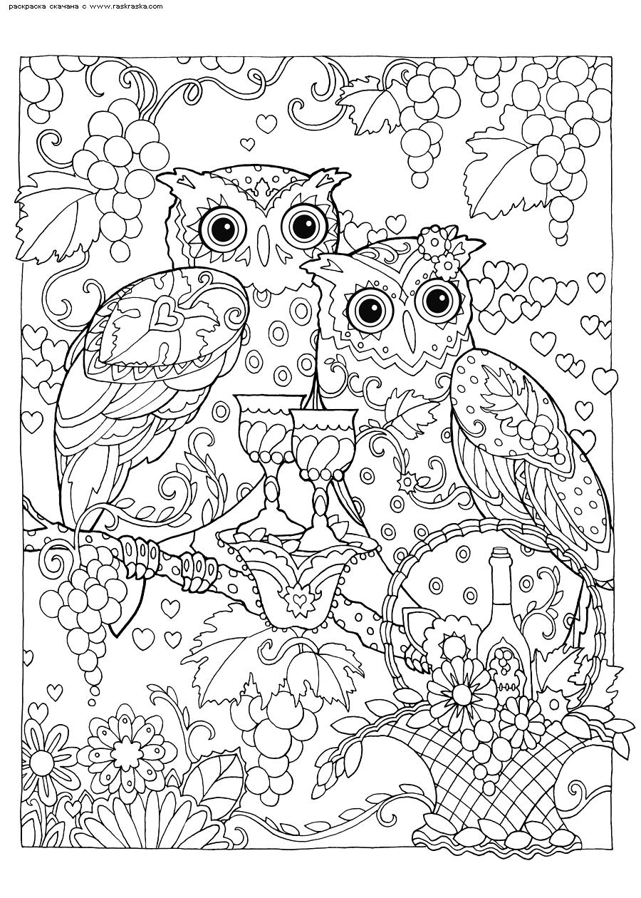 Раскраска Пир. Раскраска совы, антистресс