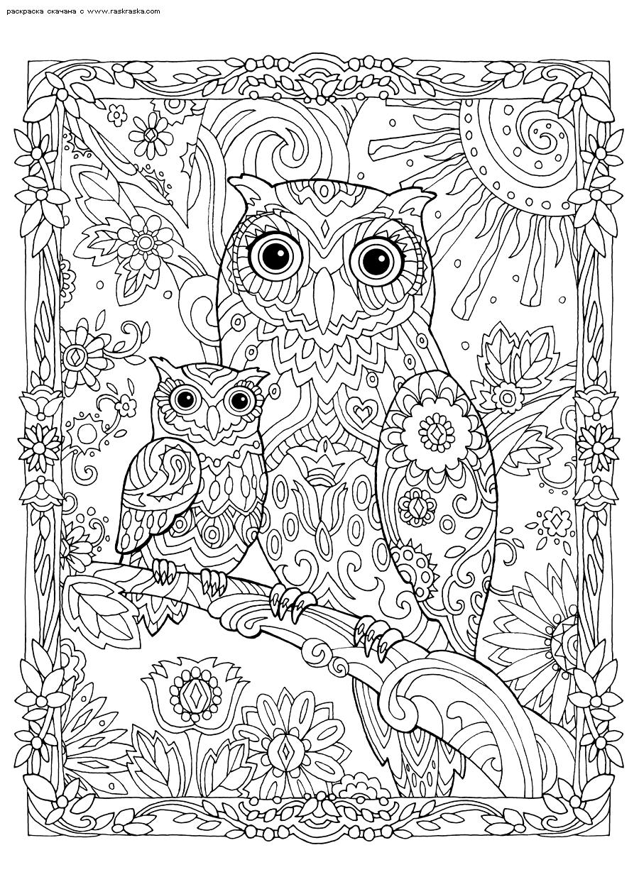 Раскраска Сова и совенок. Раскраска сова, антистресс