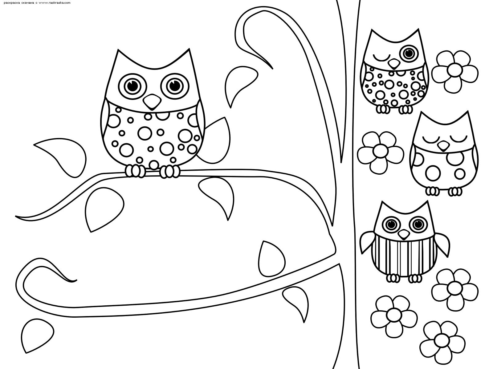 Раскраска Совы. Раскраска совы, антистресс