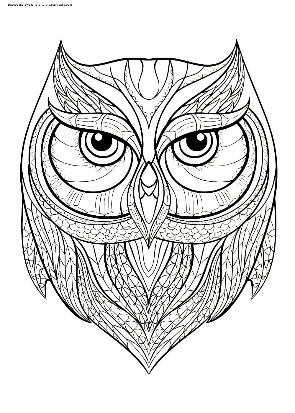 Раскраска Мудрая сова | Раскраски антистресс Совы. Сложные ...