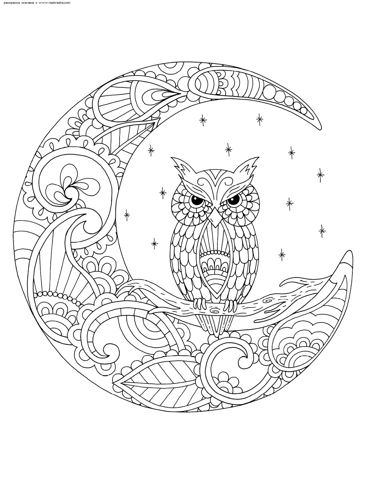 Раскраска Сова и месяц. Раскраска сова, месяц, антистресс