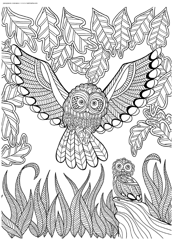 Раскраска Сова и совенок в лесу. Раскраска сова, антистресс