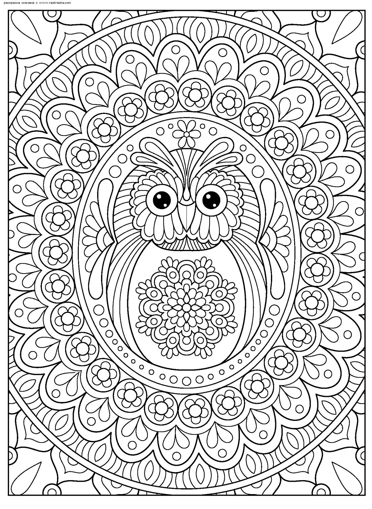 Раскраска Совенок. Раскраска сова, антистресс