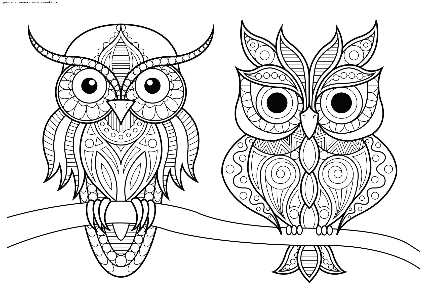 Раскраска Филин и сова на ветке. Раскраска сова, филин, антистресс