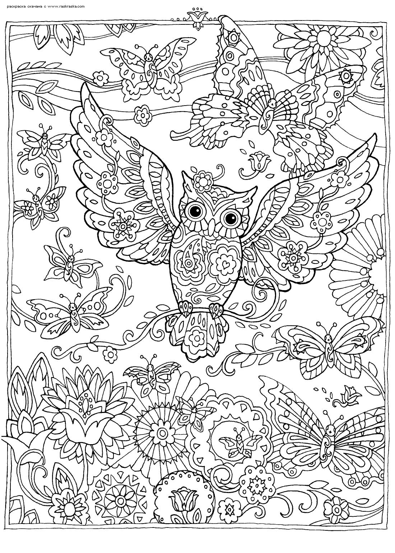 Раскраска Бабочка и сова | Раскраски антистресс Совы ...