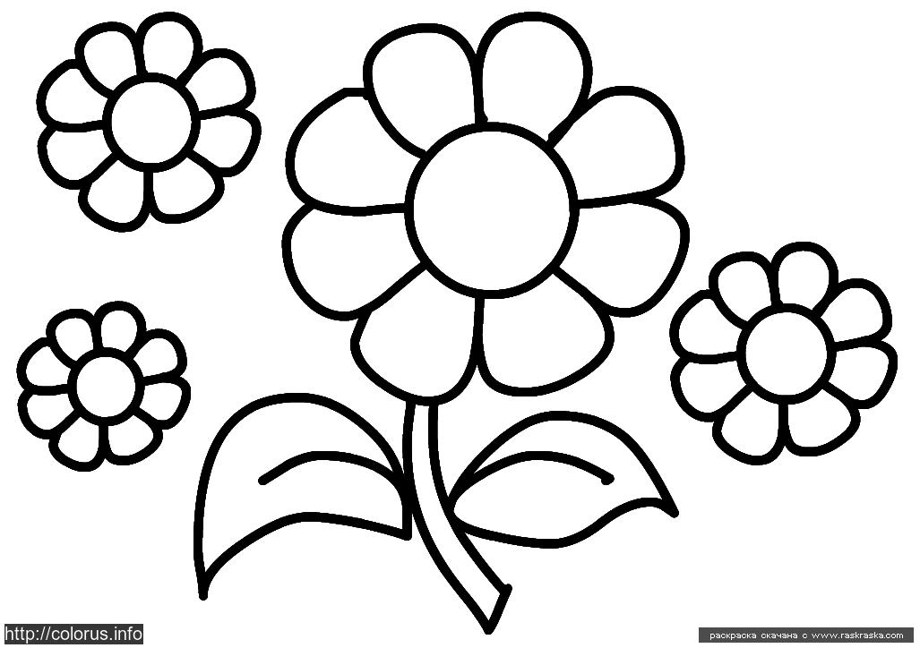 Простые раскраски цветы
