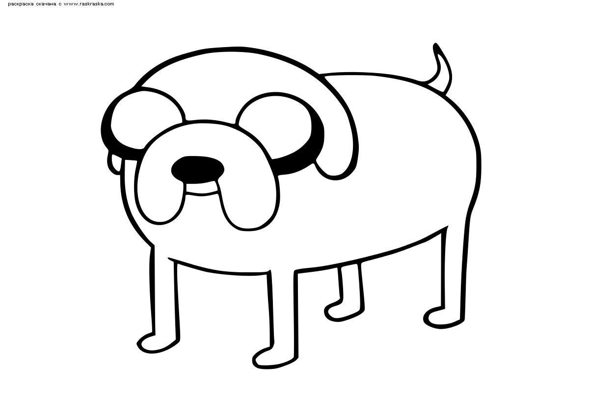 Раскраска Пес Джейк. Раскраска Волшебный пес, Время приключений