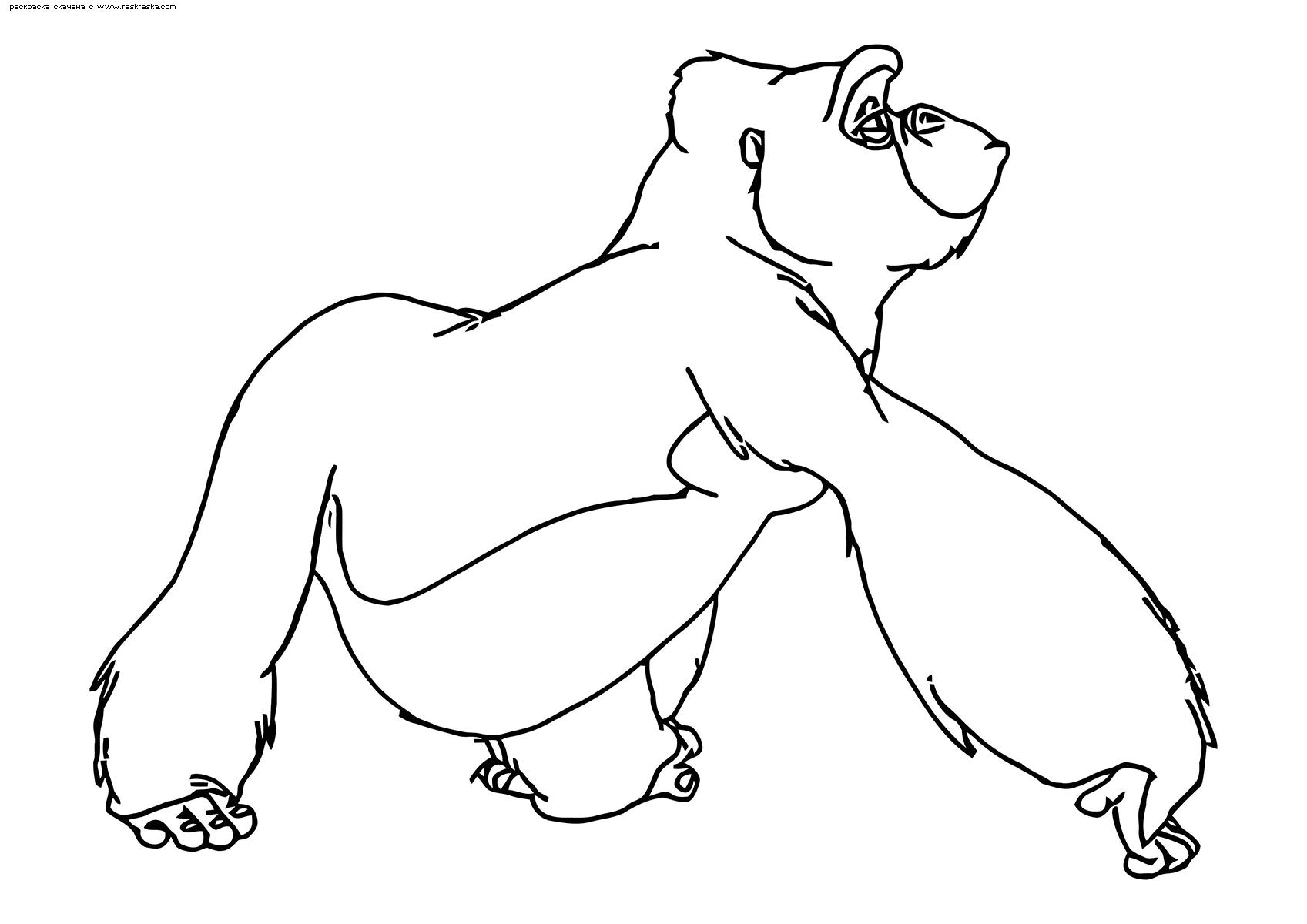 Раскраска Горилла Кала   Раскраски из мультфильма Тарзан ...