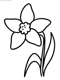 Нарцисс - скачать и распечатать раскраску. Раскраска цветок, нарцисс