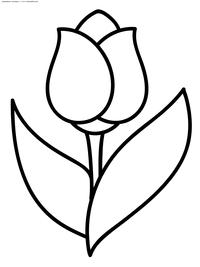 Тюльпан - скачать и распечатать раскраску. Раскраска цветок, тюльпан