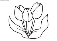 Тюльпаны - скачать и распечатать раскраску. Раскраска цветок, тюльпан