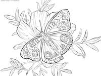 Бабочка на цветке - скачать и распечатать раскраску. Раскраска бабочка