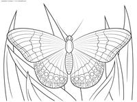 бабочка в траве - скачать и распечатать раскраску. Раскраска бабочка
