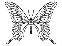 Махаон - скачать и распечатать раскраску. Раскраска бабочка