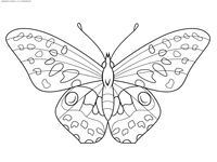 Бабочка - скачать и распечатать раскраску. Раскраска бабочка