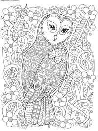 Полярная сова - скачать и распечатать раскраску. Раскраска сова, антистресс