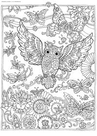 Бабочка и сова - скачать и распечатать раскраску. Раскраска сова, бабочка, антистресс