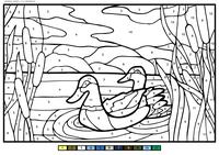 Утки в камышах - скачать и распечатать раскраску. Раскраска утка, по номерам, камыш
