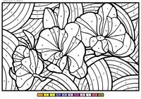 Орхидей - скачать и распечатать раскраску. Раскраска цветок, по номерам
