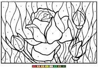 Розы - скачать и распечатать раскраску. Раскраска розы. по номерам