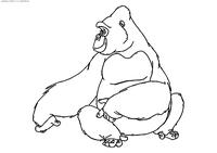 Горилла Кала - скачать и распечатать раскраску. Раскраска Горилла, обезьяна