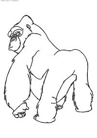Горилла Керчак - скачать и распечатать раскраску. Раскраска Горилла, обезьяна