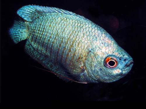 Смена воды в аквариуме. Что важно знать?